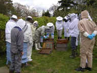 Westerham Branch of the Kent Beekeepers' Association
